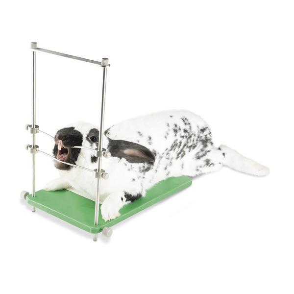 Pakiet składający się ze stojaka do leczenia zębów dla gryzoni i modelu zębów dla gryzoni