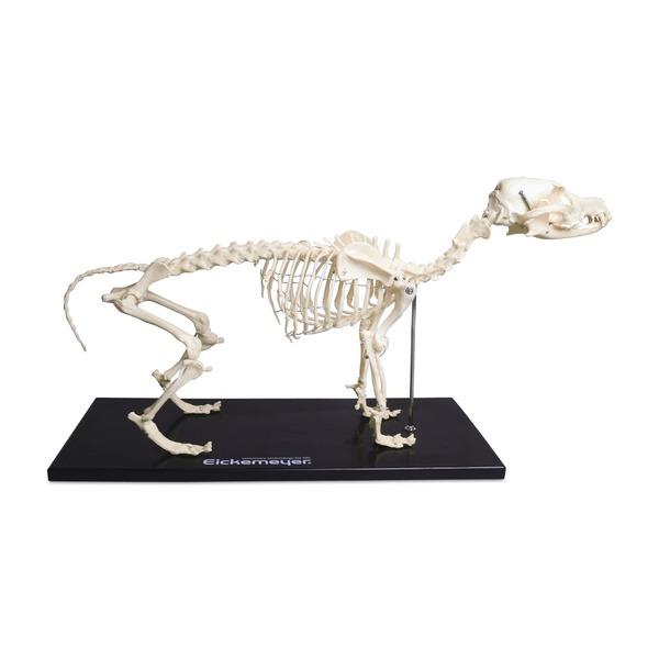 Szkielet psa, tworzywo sztuczne