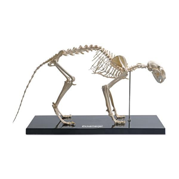 Szkielet kota, tworzywo sztuczne